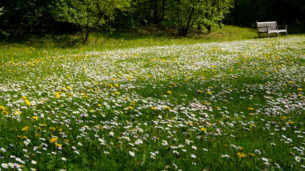 Frühlingswiese mit Parkbank