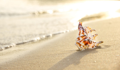 Macro photo of sea shell on sandy beach