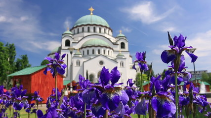Temple of Saint Sava and beautiful flowers in Belgrade - Serbia