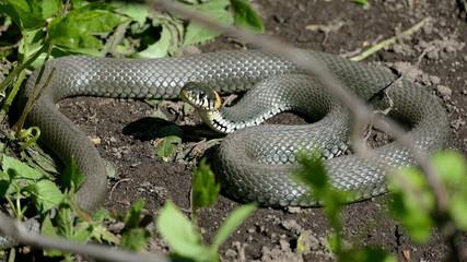snake basking in the sun