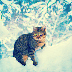 Cat in the deep snow in the forest