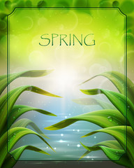 Bright spring background with grass and water.