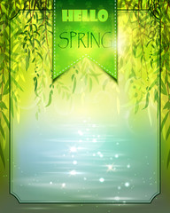 Spring background with willow and water.
