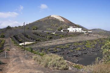 Azienda agricola alle Canarie