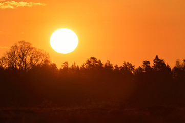 Sunrise with forest background