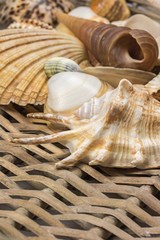 Closeup view of seashells in the used wicker basket. Vertically.