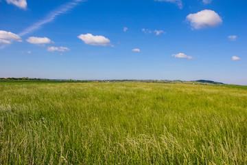Beautiful Landscape Green Barley Blue Sky