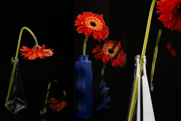 Orange gerberas-bottle