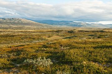 Summer tundra