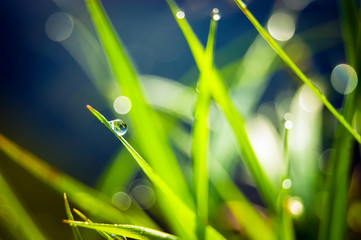 drops of dew on the green grass with bokeh