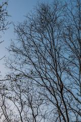 Branch of tree