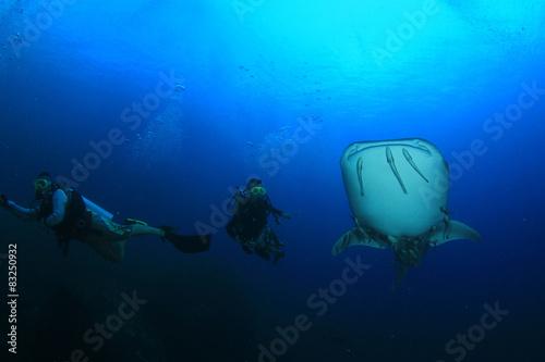 Aluminium Schipbreuk Scuba diving with Whale Shark