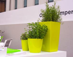Plants inside the green pots