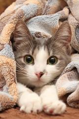 Кошка в пледе