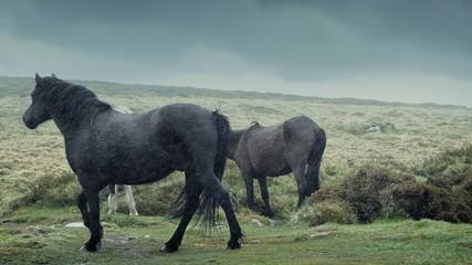 Horses Walking In Rainy Wilderness