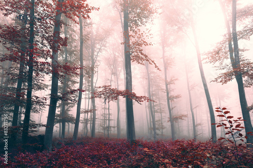 Beautiful red colored foggy forest landscape