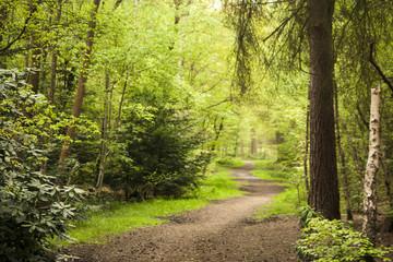 A Walk Through The Trees
