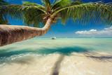 Beautiful palm tree over caribbean sea - Fine Art prints