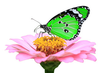exotic green butterfly
