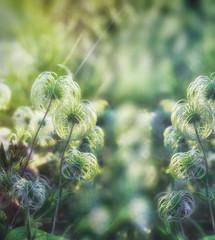 Beautiful softness flower - fluffy flower