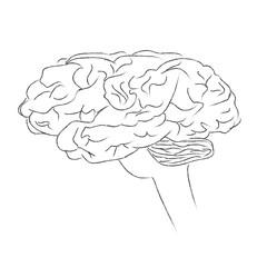 Brain, human, think, vector, illustration, sketch
