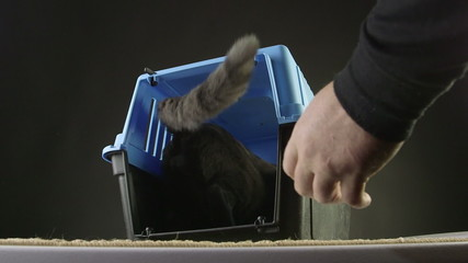 cat going to on a journey in pet cage carrier to vet or vacation