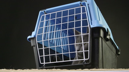 Cute gray cat sitting inside pet cage carrier