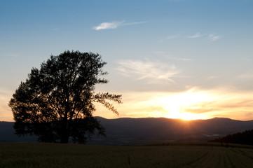 夕暮れの空と一本の木
