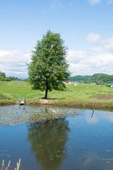 池の畔に立つ一本の木