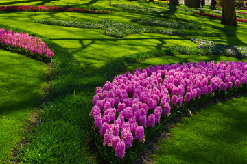 Beautiful garden.  Park in The Spring. Spring landscape.