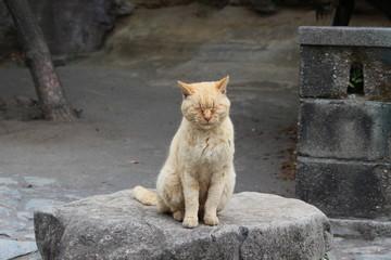 瞑想中の猫