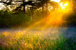 blur landscape with the sun beams  on a meadow