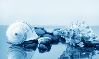 Two big sea shells and pebbles