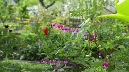 Gartenarbeit - Blumengießen