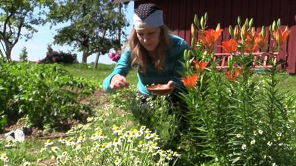 girl reap organic domestic camomile near lily bush, focus change