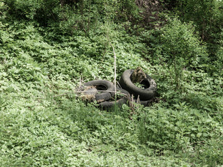 Scrap tyres in the nature