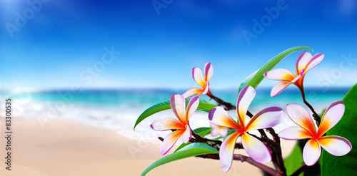 Plexiglas Plumeria plumeria flowers on the beach