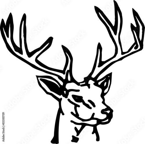 animal-deer