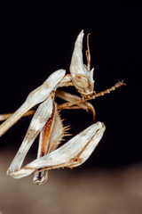 Mantis and paw