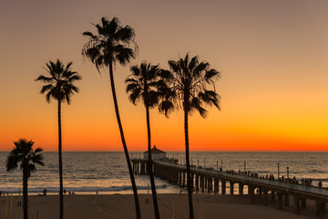 The Palm trees and Manhattan Beach Pier under a sunset