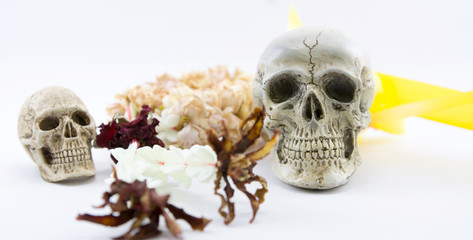 Still Life with a Skull concept on the art