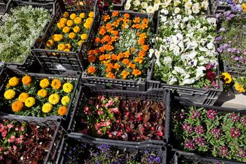 Different flower plants in the gaden center.