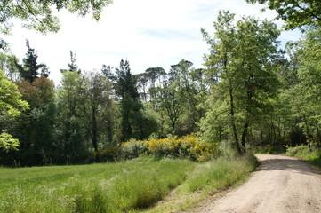 Caminata Rural