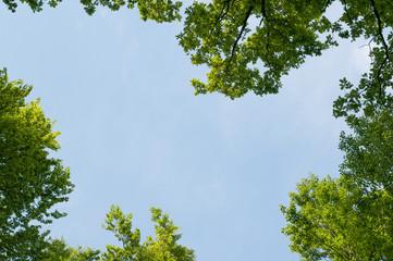 Hintergrund mit Baumkronen