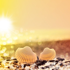 Summer beach. Two Seashells on the beach.