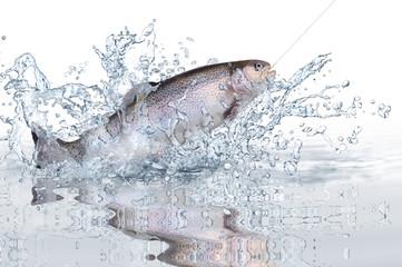 Fische 115