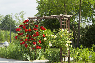 garden with roses and irises