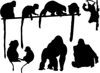 set of nine monkeys isolated on white