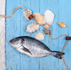 Dorade im Fischernetz