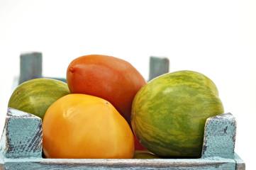 frische Tomaten in verschiedenen Farben